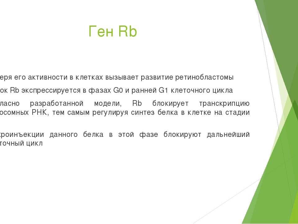 Ген Rb Потеря его активности в клетках вызывает развитие ретинобластомы Белок...