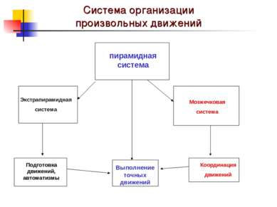 Система организации произвольных движений пирамидная система Выполнение точны...