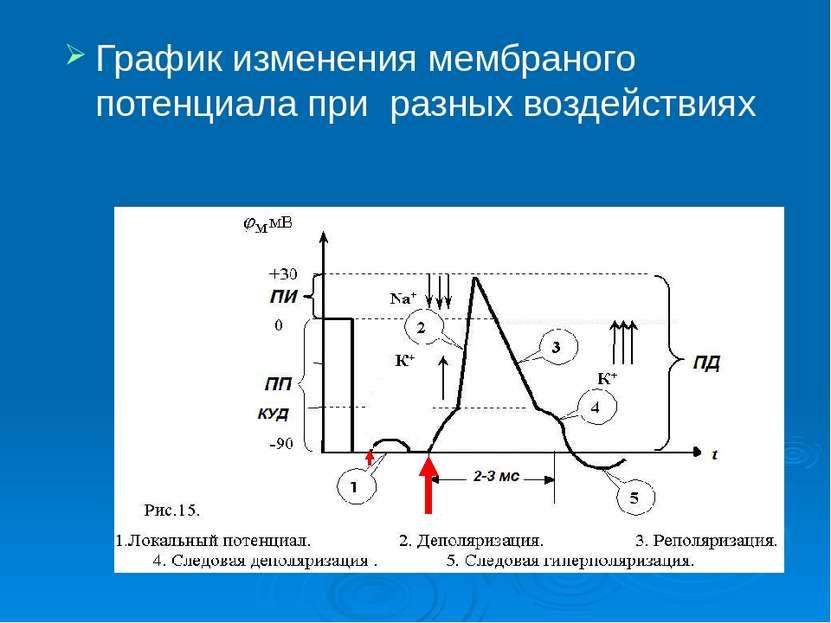 График изменения мембраного потенциала при разных воздействиях
