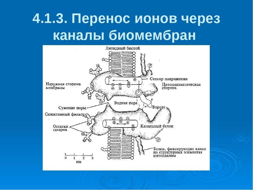 4.1.3. Перенос ионов через каналы биомембран