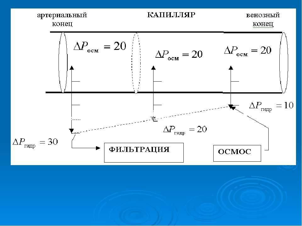 Ри Ри Рис. 9. Схема водного обмена между кровью и лимфой.