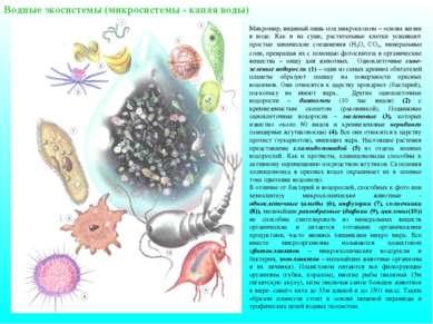 Водные экосистемы (микросистемы - капля воды) Микромир, видимый лишь под микр...