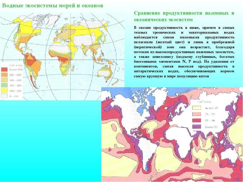 Водные экосистемы морей и океанов Сравнение продуктивности наземных и океанич...
