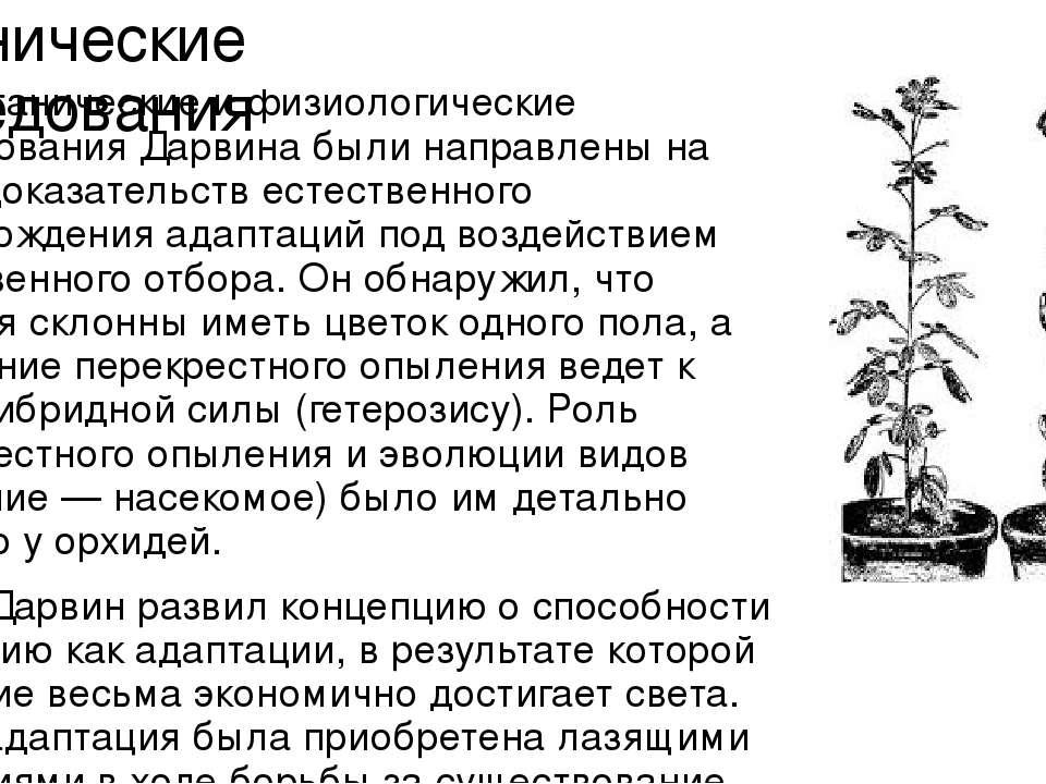 Ботанические исследования Все ботанические и физиологические исследования Дар...