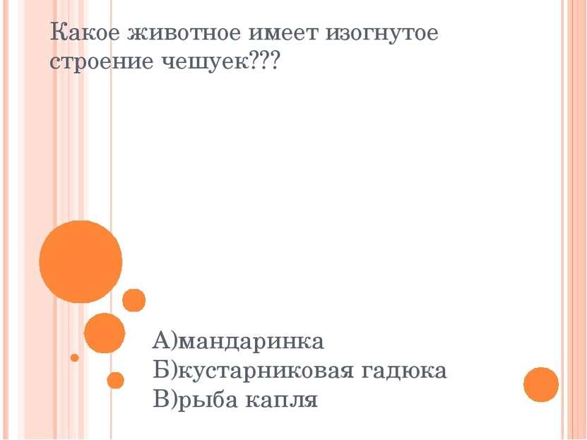 Какое животное имеет изогнутое строение чешуек??? А)мандаринка Б)кустарникова...