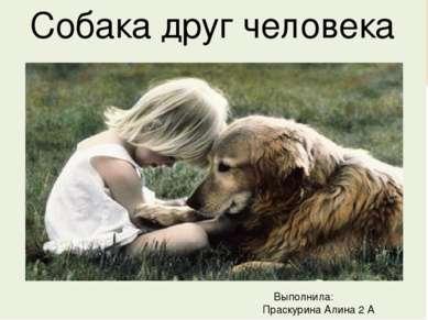 Собака друг человека Выполнила: Праскурина Алина 2 А класс