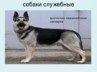 собаки служебные