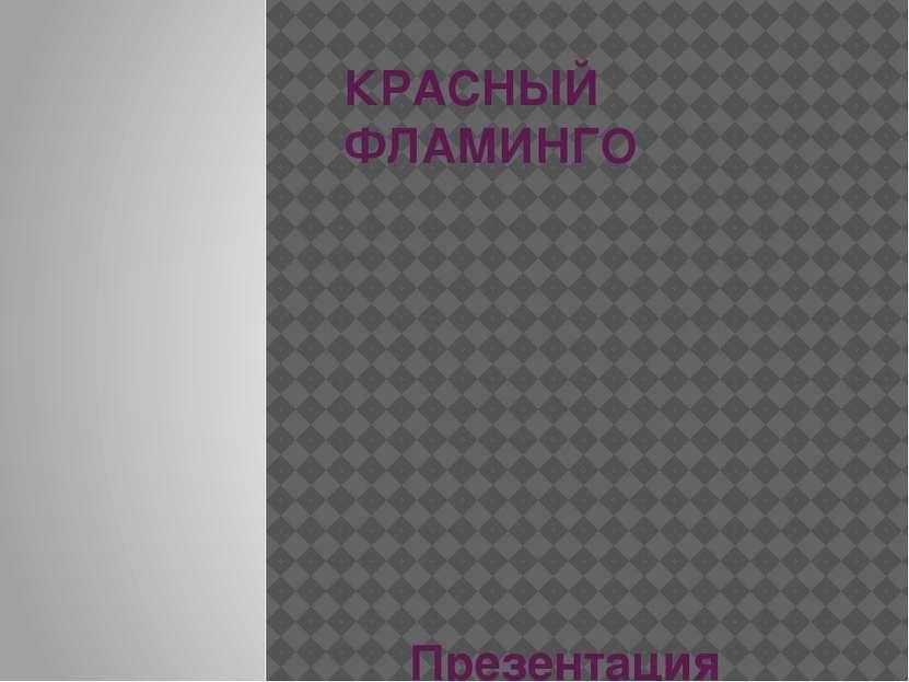КРАСНЫЙ ФЛАМИНГО Презентация Копыленкова Всеволода