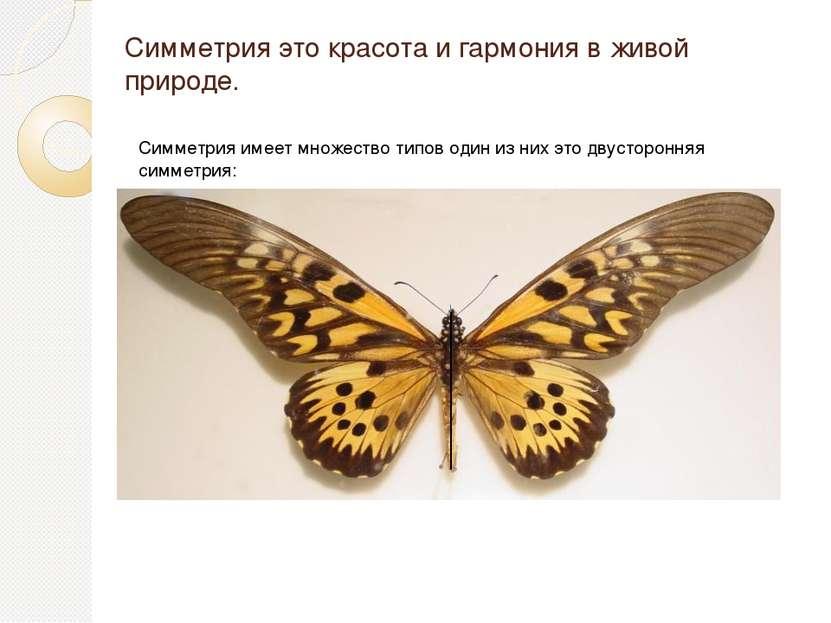 Симметрия это красота и гармония в живой природе. Симметрия имеет множество т...