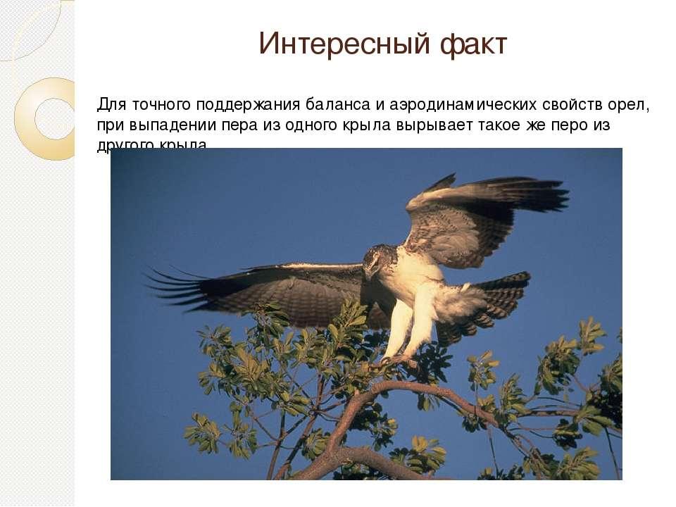 Интересный факт Для точного поддержания баланса и аэродинамических свойств ор...