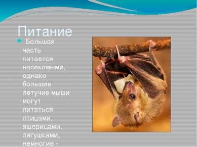 Питание Большая часть питается насекомыми, однако большие летучие мыши могут...
