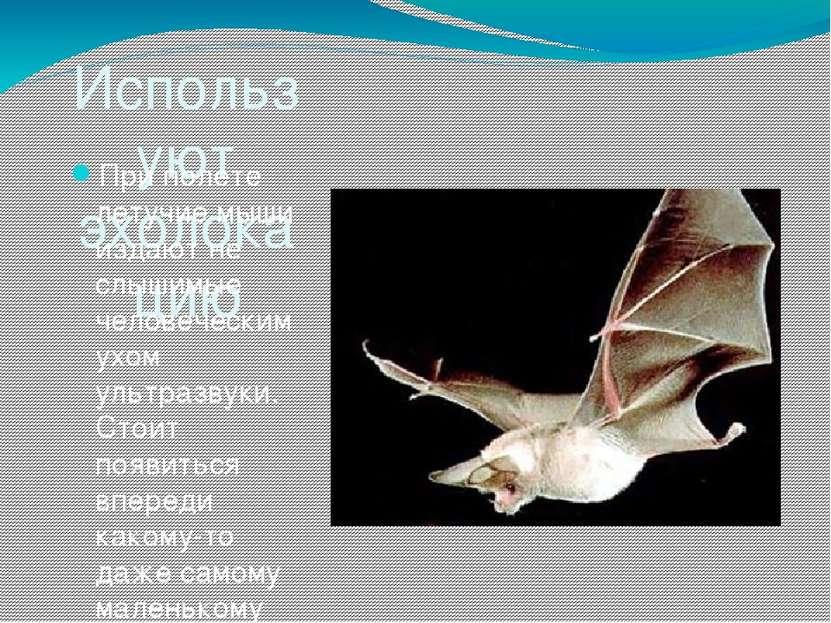 Используют эхолокацию При полете летучие мыши издают не слышимые человеческим...