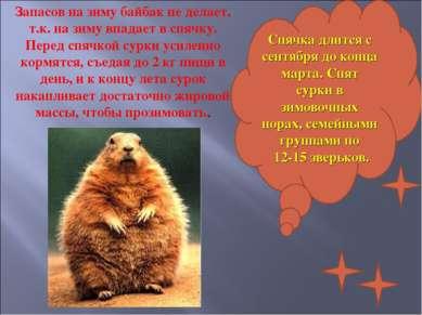 Спячка длится с сентября до конца марта. Спят сурки в зимовочных норах, семей...