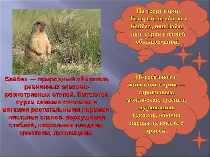На территории Татарстана обитает Байбак, или Бабак, или сурок степной обыкнов...