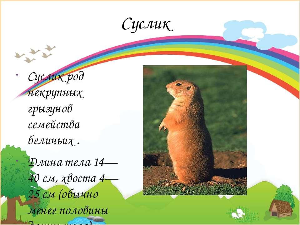 Суслик Суслик род некрупных грызунов семейства беличьих . Длина тела 14—40 см...