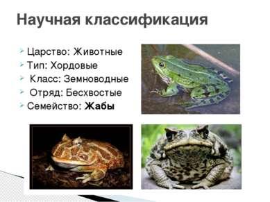 Царство: Животные Тип: Хордовые Класс: Земноводные Отряд: Бесхвостые Семейств...