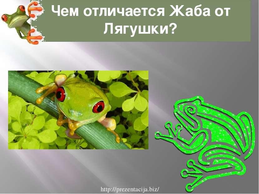 Чем отличается Жаба от Лягушки? http://prezentacija.biz/