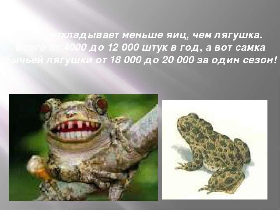 Жаба откладывает меньше яиц, чем лягушка. Всего от 4000 до 12 000 штук в год,...