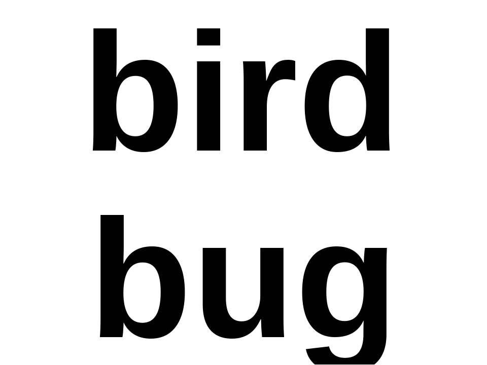 bird bug