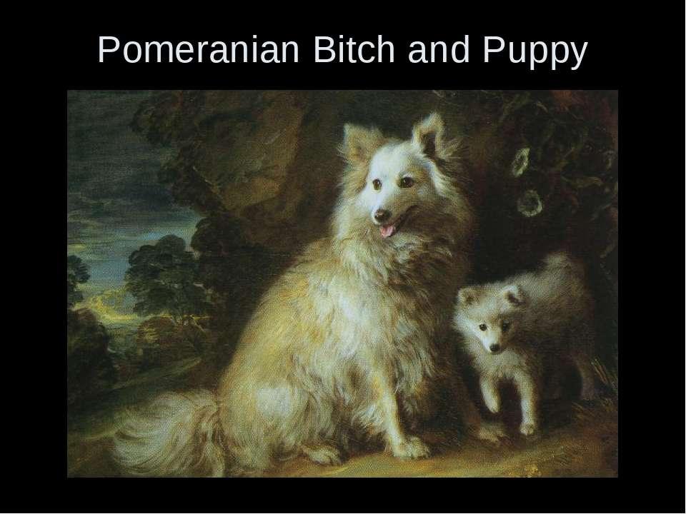 Pomeranian Bitch and Puppy
