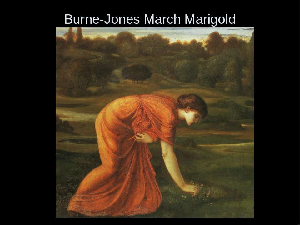 Burne-Jones March Marigold