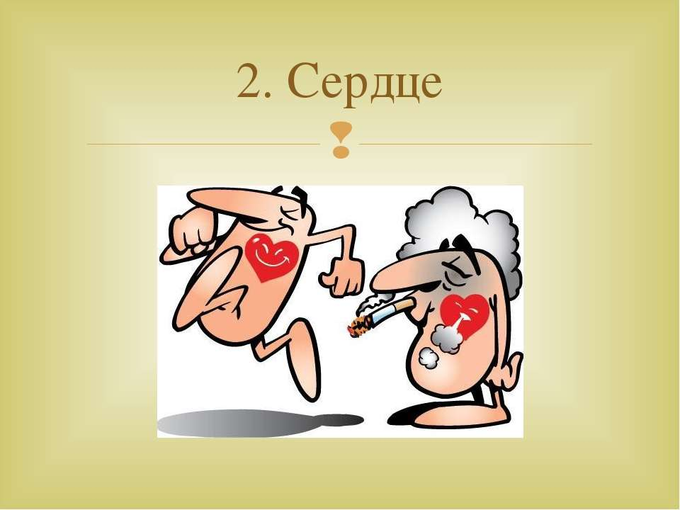 2. Сердце