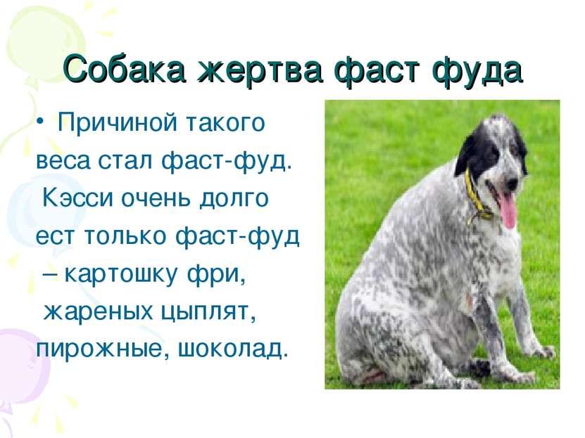 Собака жертва фаст фуда Причиной такого веса стал фаст-фуд. Кэсси очень долго...