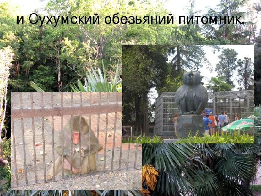 и Сухумский обезьяний питомник.