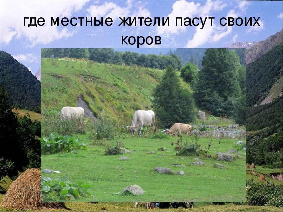 где местные жители пасут своих коров