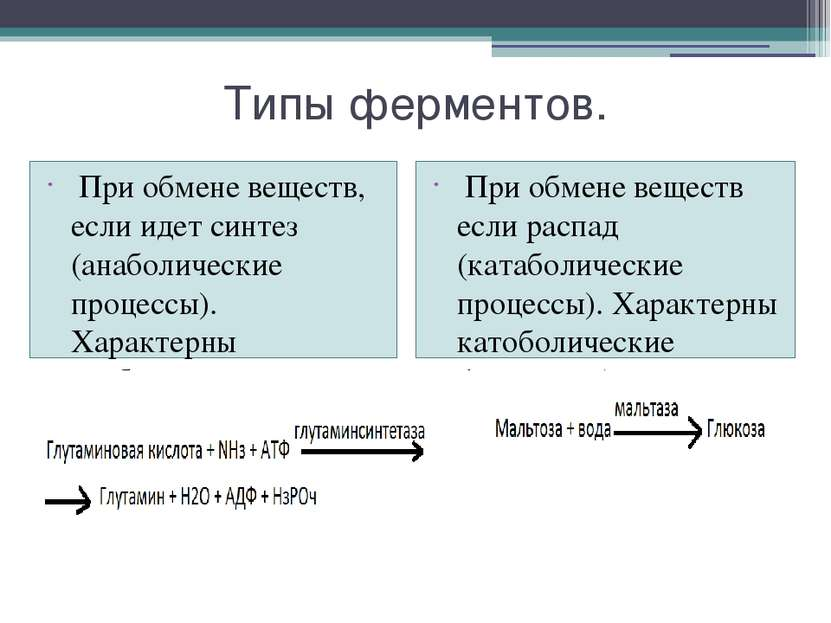 Типы ферментов. При обмене веществ, если идет синтез (анаболические процессы)...