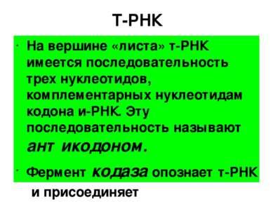 Т-РНК На вершине «листа» т-РНК имеется последовательность трех нуклеотидов, к...