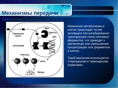 Механизмы передачи гормонального сигнала Изменение метаболизма в клетке проис...