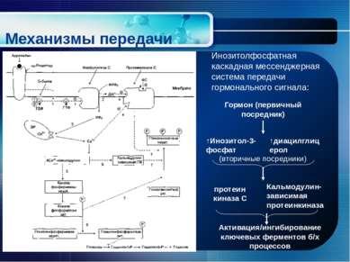Механизмы передачи гормонального сигнала Инозитолфосфатная каскадная мессендж...