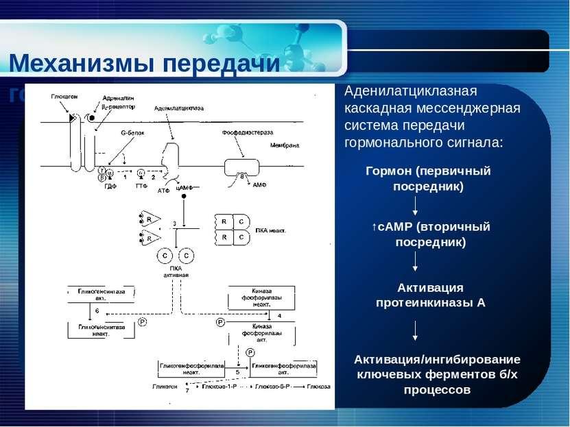 Механизмы передачи гормонального сигнала Аденилатциклазная каскадная мессендж...