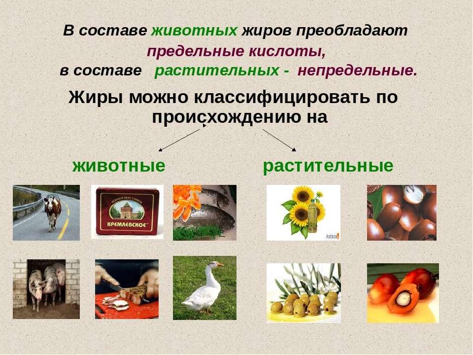 В составе животных жиров преобладают предельные кислоты, в составе растительн...