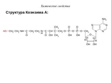 Структура Коэнзима А: Химические свойства