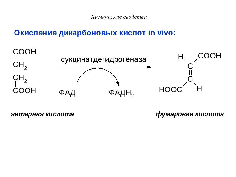 Химические свойства Окисление дикарбоновых кислот in vivo: янтарная кислота ф...