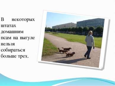 В некоторых штатах домашним псам на выгуле нельзя собираться больше трех.