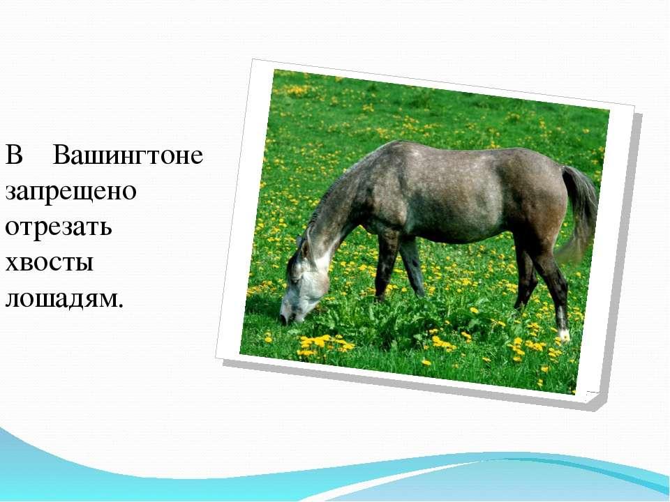 В Вашингтоне запрещено отрезать хвосты лошадям.