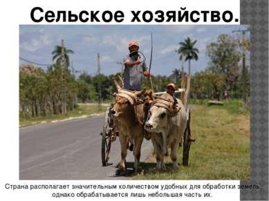 Сельское хозяйство. Страна располагает значительным количеством удобных для о...