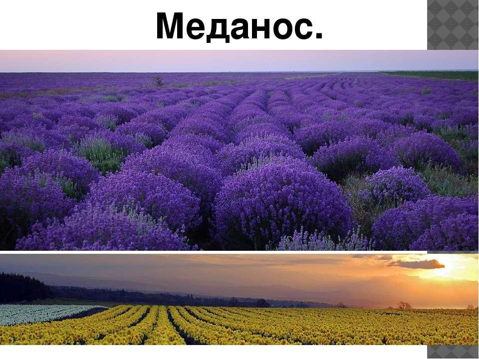 Меданос.