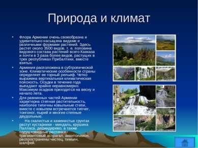Природа и климат Флора Армении очень своеобразна и удивительно насыщена видам...