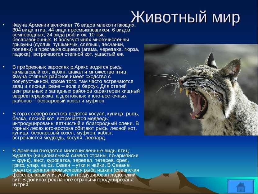 Животный мир Фауна Армении включает 76 видов млекопитающих, 304 вида птиц, 44...