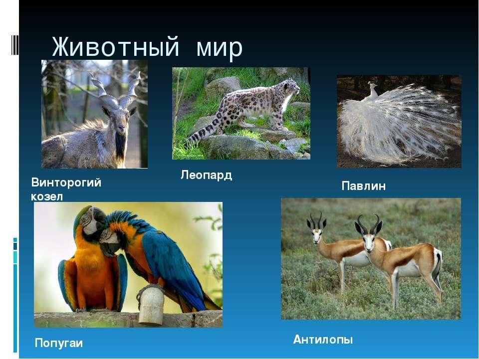 Животный мир Винторогий козел Леопард Павлин Попугаи Антилопы