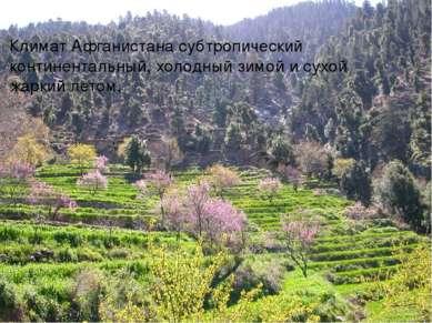 Климат Афганистана субтропический континентальный, холодный зимой и сухой жар...