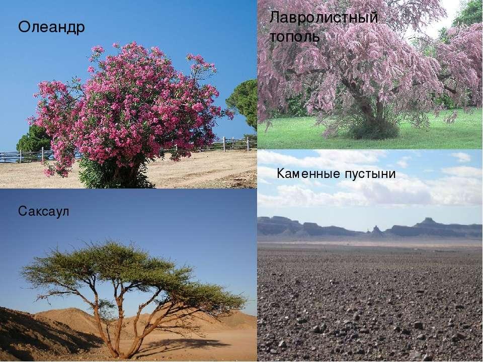 Флора На равнинах Афганистана преобладают пустыни. Плоскогорья заняты степями...