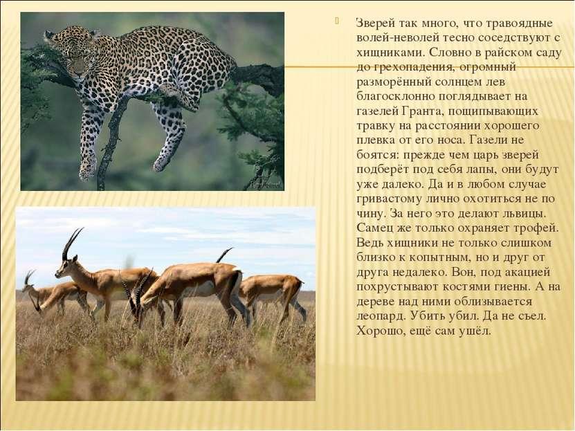Зверей так много, что травоядные волей-неволей тесно соседствуют с хищниками....