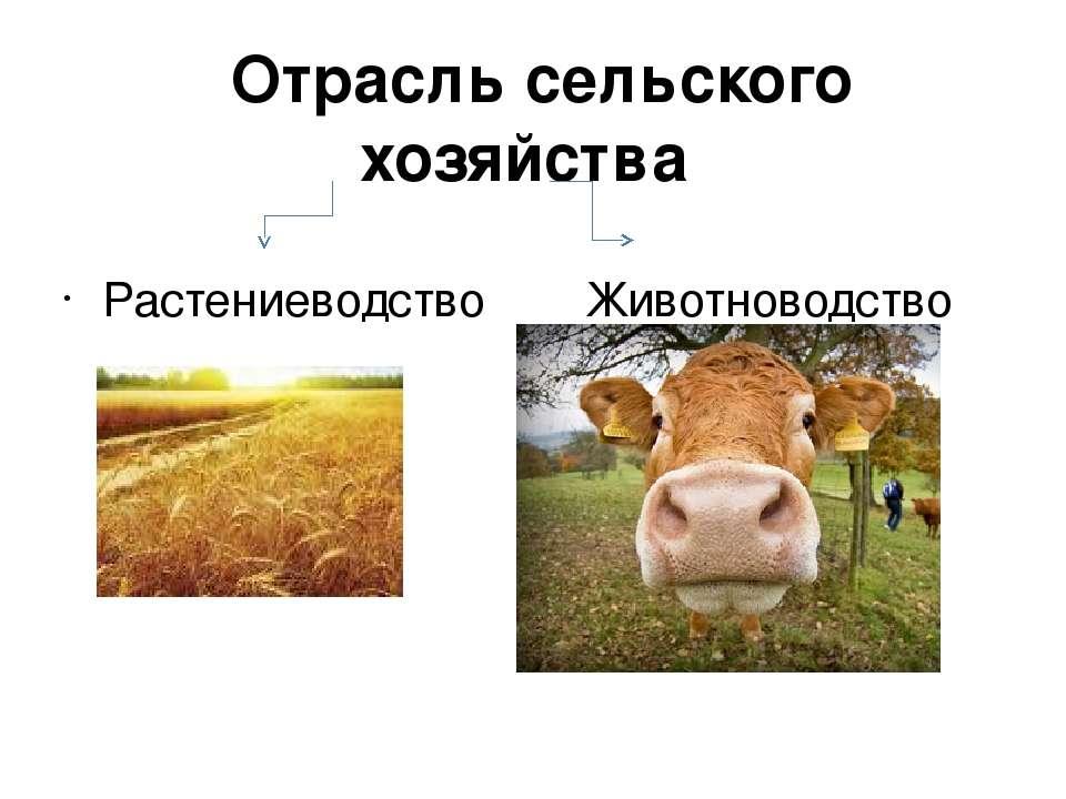 Животноводство Отрасльс/х Районыраспространения Наличиеблагоприятных условий ...