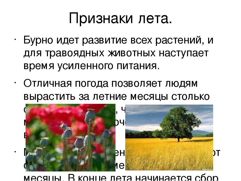 Признаки лета. Бурно идет развитие всех растений, и для травоядных животных н...