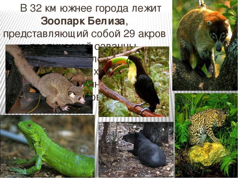 В 32 км южнее города лежит Зоопарк Белиза, представляющий собой 29 акров троп...